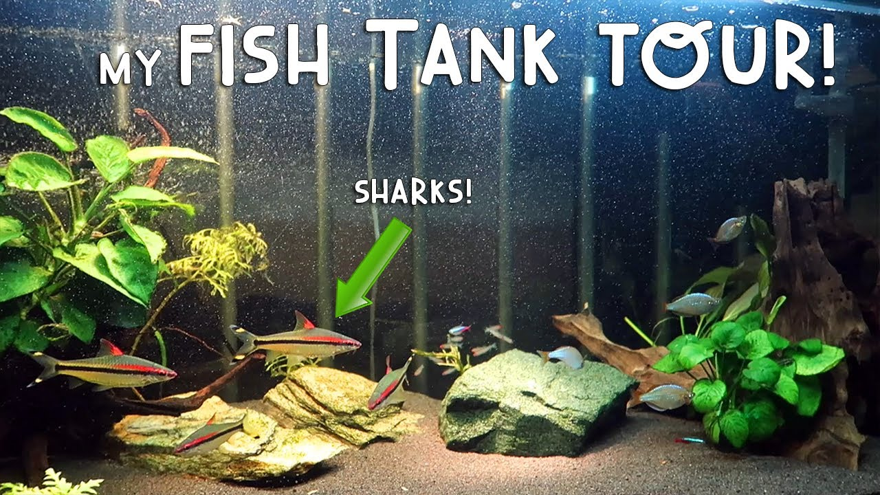 My Fish Tank Tour Sharks Vlog 175 Mikey Bustos Videos